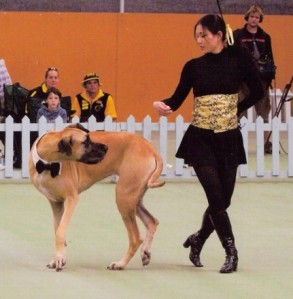 Performing a canine freestyle routine...