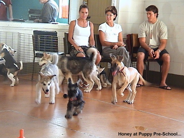 Me socialising with other puppies at the Puppy Play Centre