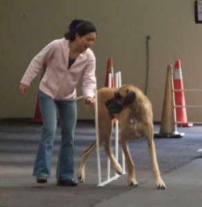 Trying out agility!