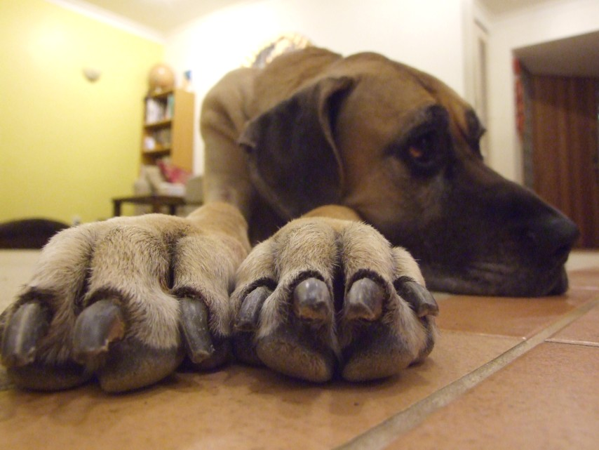 Honey+paws