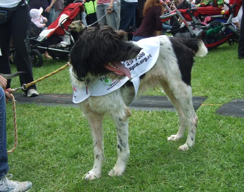 SPCA-dog